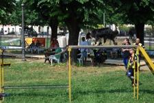 ORZI DOG SHOW 2015
