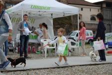 ORZI DOG SHOW 2013